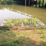 Floating wetlands installed at Indian Lake