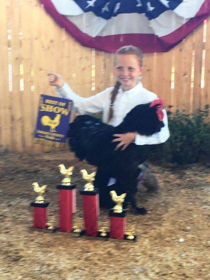 Alexis Oakley of Lakeview won Best of Show Fancy Poultry Breeders at the Logan County Fair. She is a member of the Lucky Lakers 4-H Club. This was her first year showing at the fair. Alexis is the daughter of Daniel Oakley and Bree Stauffer.