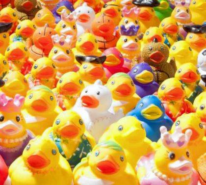 The ducks are coming to Harborfest. It's still not too late to purchase your own Duck for the Great Wacky Duck Slide at Harborfest.